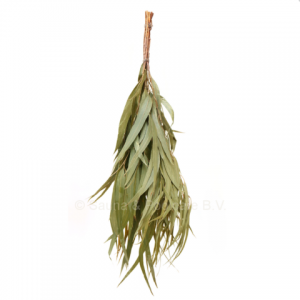 Saunatakken Eucalyptus